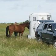 Transport du cheval