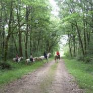 Le 5 Mai Randonnée du Muguet sur Mervent  85200