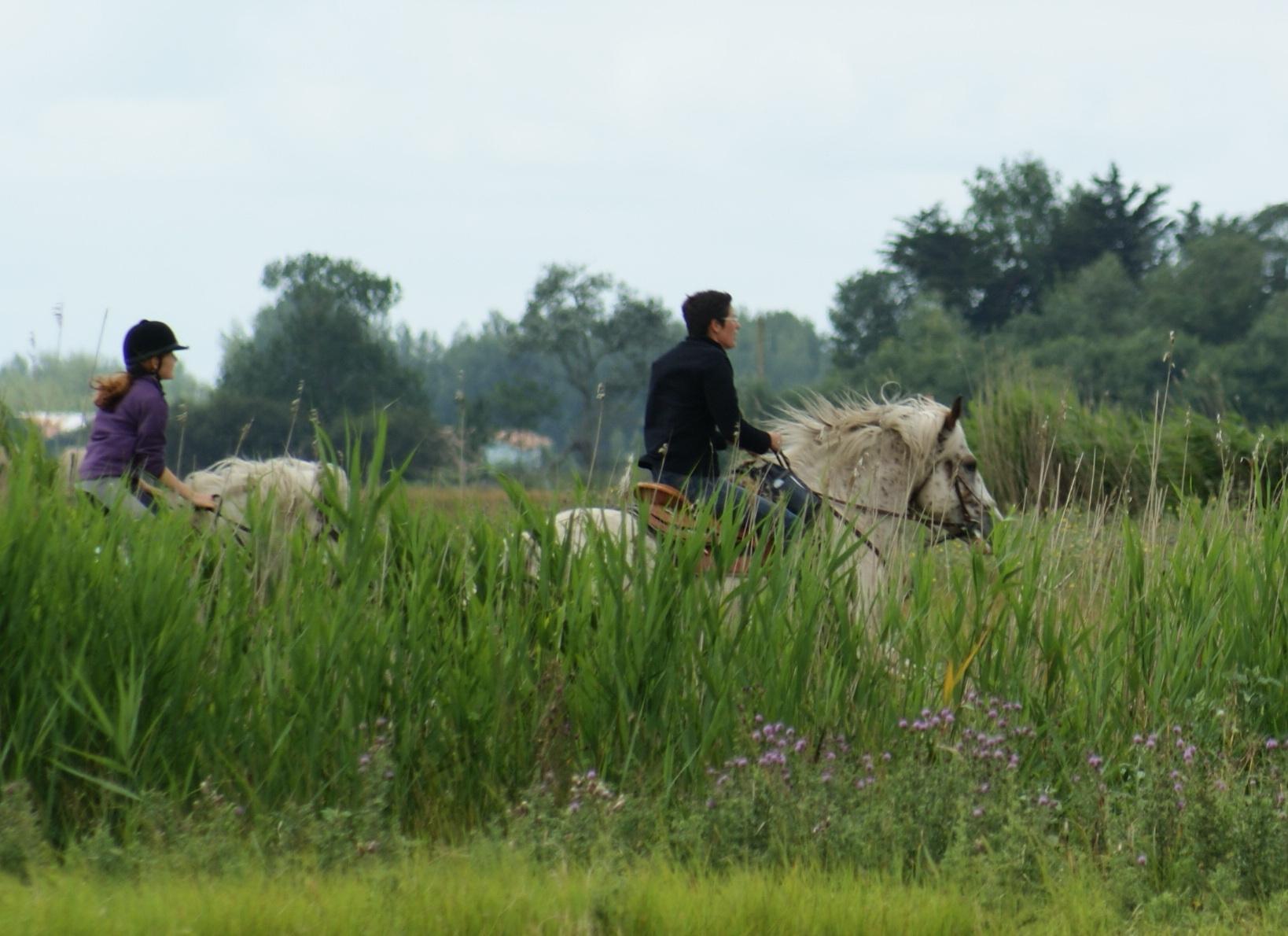 balade equestre dans le marais de sallertaine
