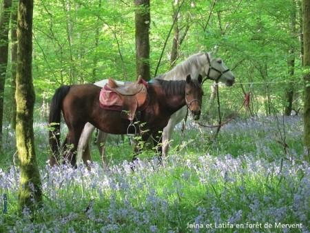 Gérard Soulard-chevaux mervent-portrait