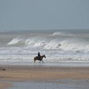 Réglementation : Accès des chevaux au littoral